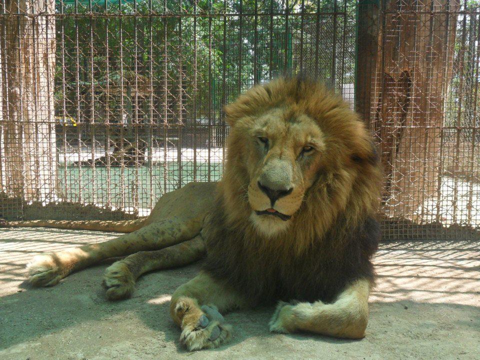 Zoo Luján (Fábio Padilha)