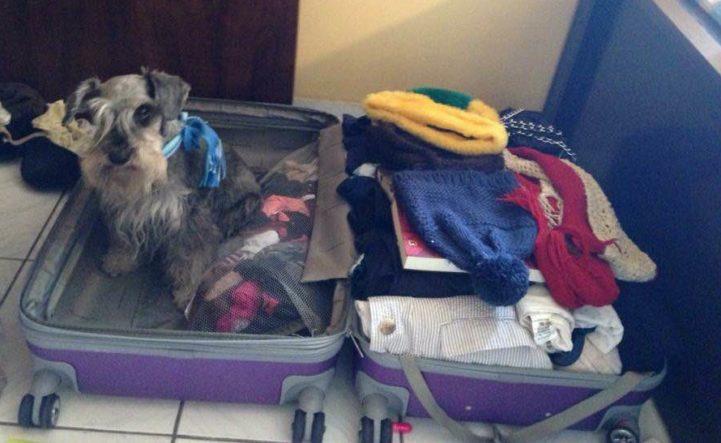 Wilson entrou na minha mala para chamar a atenção
