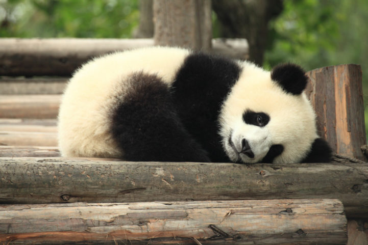 Fabuloso 5 destinos para conhecer alguns dos animais mais fofos do mundo  WL01